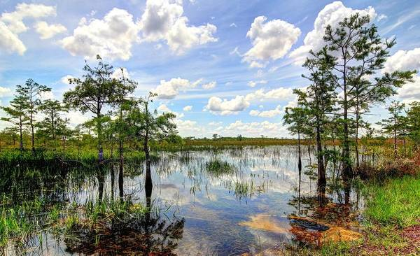 Everglades Art Print featuring the photograph Everglades Landscape 8 by Rudy Umans