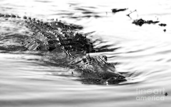 Alligator. Wildlife Art Print featuring the photograph Lunch Time by Raymond Earley