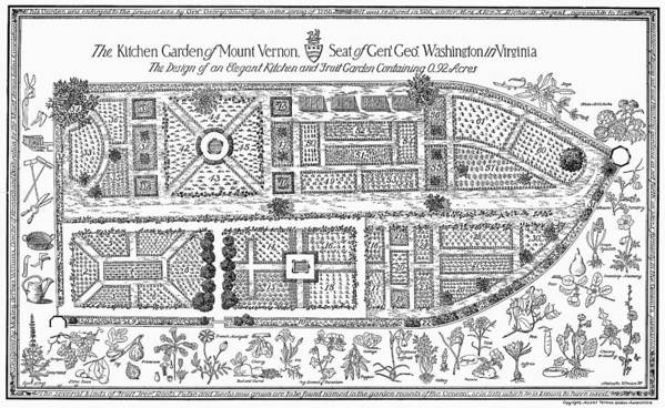18th Century Art Print featuring the photograph Mount Vernon: Garden by Granger