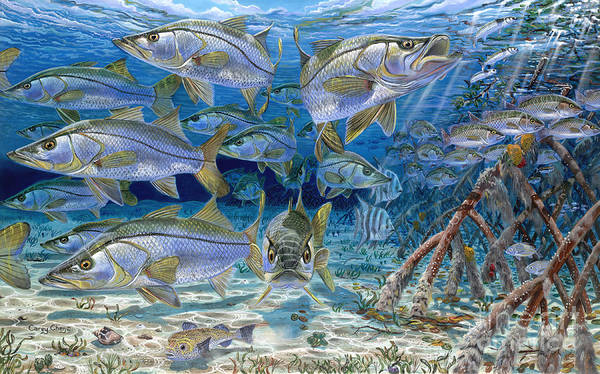 Snook Art Print featuring the painting Snook Cruise In006 by Carey Chen