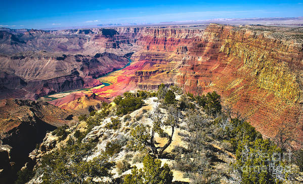 Grand Canyon Art Print featuring the photograph South Rim From The Butte by Robert Bales
