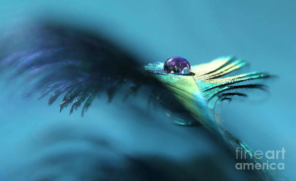 Peacock Feather Art Print featuring the photograph Take Flight by Krissy Katsimbras