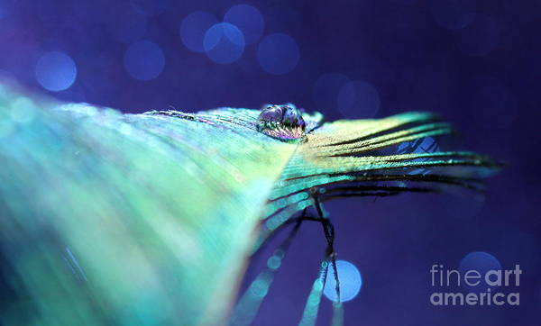 Peacock Feather Art Print featuring the photograph Twilight Dreams by Krissy Katsimbras