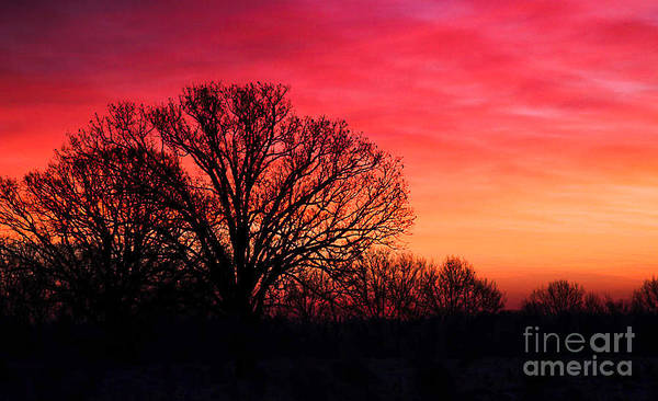 Sunrise Art Print featuring the photograph Winter Sunrise by Todd Bielby
