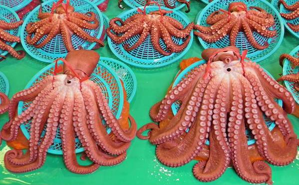 South Korea Art Print featuring the photograph Octopus Attractively Arranged by David Rich