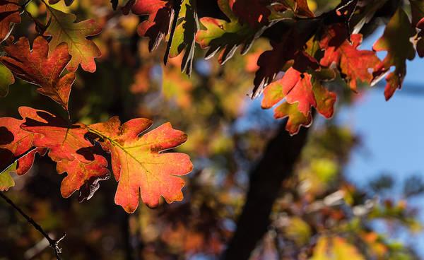 Fall Colors Art Print featuring the photograph Fall Leaves by Naga Bhargav Garaga