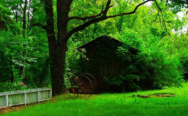 Landscape Art Print featuring the photograph A Good Snooze Place by Lee Plate