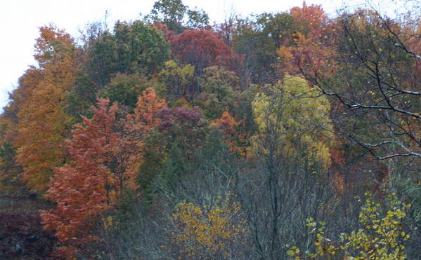 Color's Of Fall Art Print featuring the photograph Color's Of Fall by Kevin Dunham