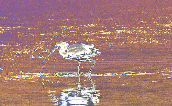 Manipulated Art Print featuring the photograph Egret II by John Roncinske