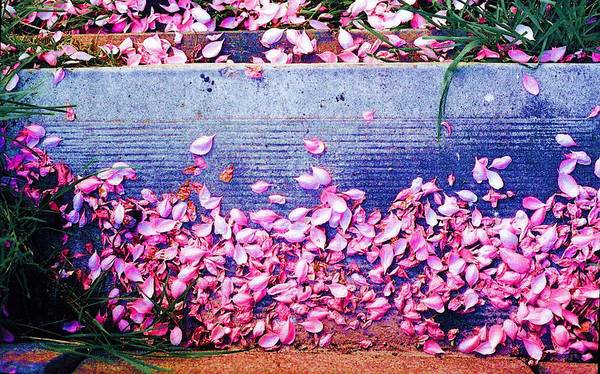 Flowers Art Print featuring the photograph Flower Petals Saturated Ae by Lyle Crump