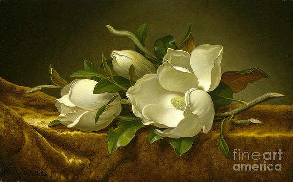 Martin Johnson Heade 1819-1904 Art Print featuring the painting Giant Magnolias On A Cloth by MotionAge Designs