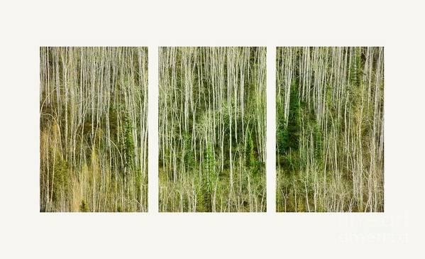 Lines Art Print featuring the photograph Hillside Forest by Priska Wettstein
