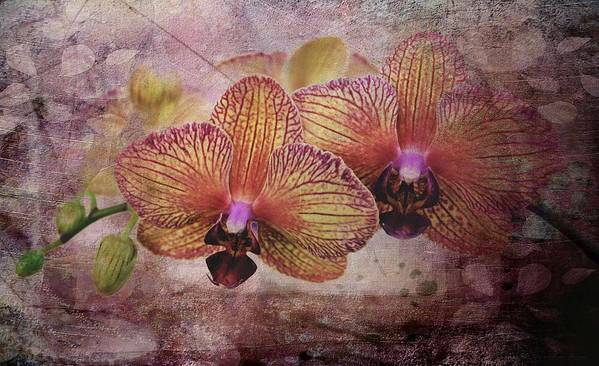 Orchids Art Print featuring the photograph Orchid Layers by Mattie Bryant