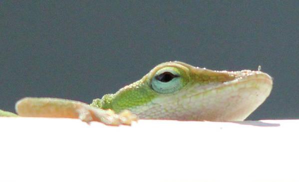 Lizard Art Print featuring the painting Peek-a-boo Lizard by Stephanie Lanoue