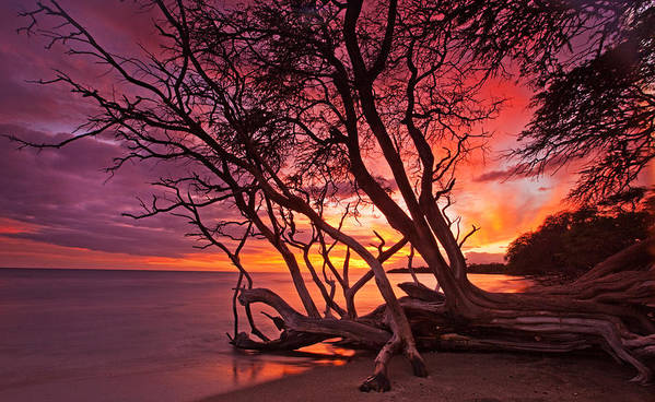 Maui Hawaii Olowalu Beach Ocean Trees Sunset Nature Art Print featuring the photograph Red Sunset by James Roemmling