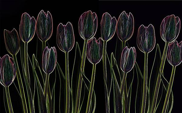 Scanography Art Print featuring the digital art Velvet Tulips by Deborah J Humphries