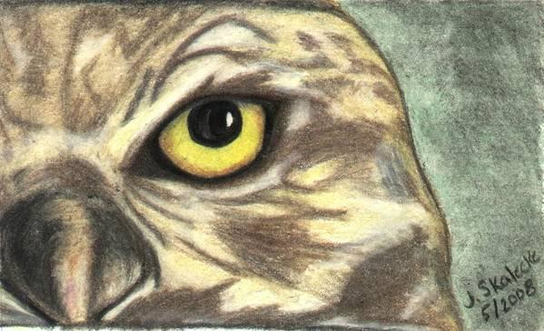 Owl Art Print featuring the drawing Watchful Eye by Jennifer Skalecke