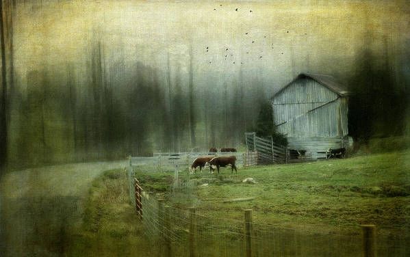 Barn Art Print featuring the photograph Cows By The Road by Kathy Jennings