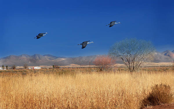 Photography Art Print featuring the photograph Cranes In Flight by Barbara Manis