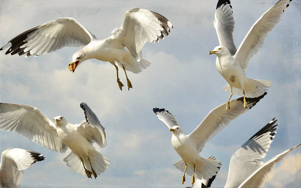 Seagulls Art Print featuring the photograph Crowded Skies 2 by Fraida Gutovich