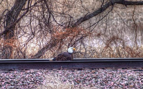 Eagle Art Print featuring the photograph Eagle Has Landed by M Dale