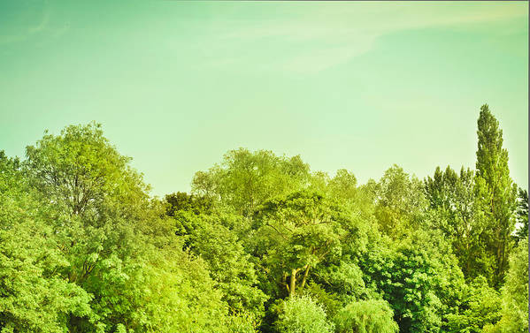 Background Art Print featuring the photograph Forest by Tom Gowanlock