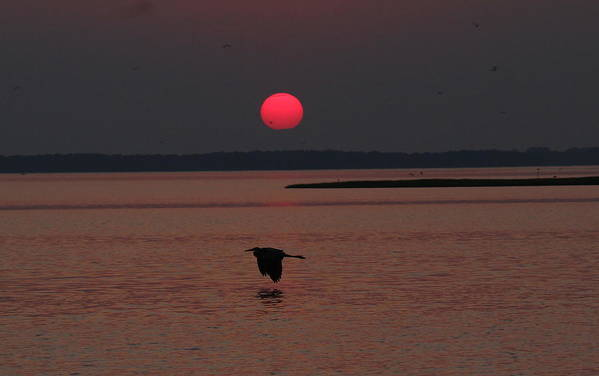 Sunset Art Print featuring the photograph Peaceful Crossing by David Jones