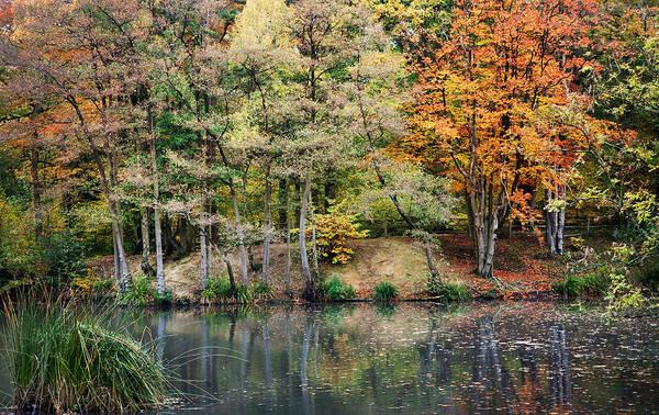 Autumn Art Print featuring the photograph Trees In Autumn by Natalie Kinnear