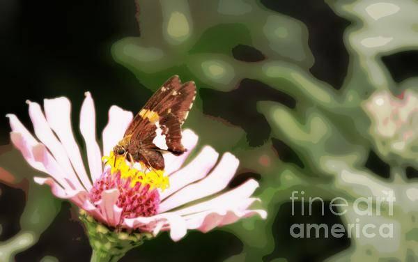 Art Print featuring the photograph Butterfly Flower by Brian Seidenfrau
