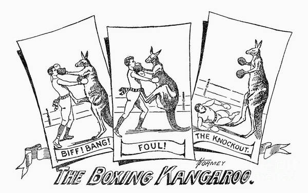 Circus Boxing Kangaroo Art Print By Granger