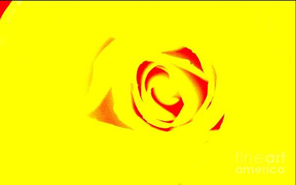 Rose Art Art Print featuring the photograph Curves by Kim Henderson