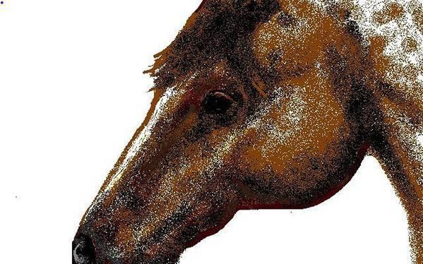 Horse Art Print featuring the digital art Appaloosa Eye by Carole Boyd