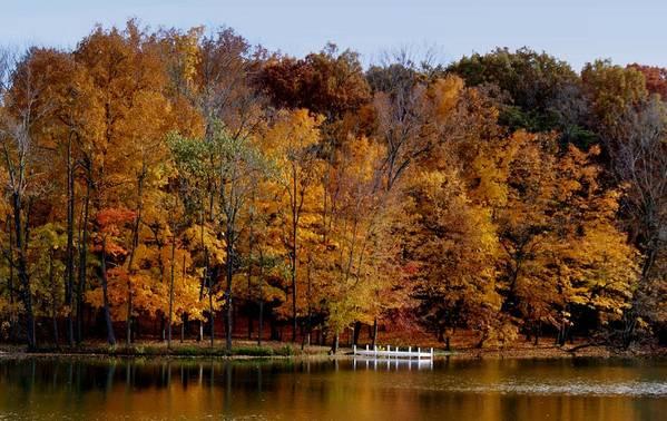 Autumn Trees Art Print featuring the photograph Autumn Trees by Sandy Keeton
