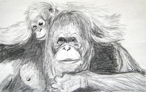 Wildlife Art Print featuring the drawing Gorillas by Vallee Johnson