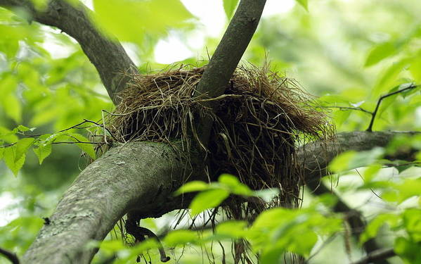 Nest Art Print featuring the photograph Nesting Place by Jim Greer