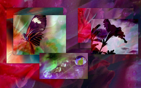 Petunia Art Print featuring the photograph Petunia Collage by Irma BACKELANT GALLERIES