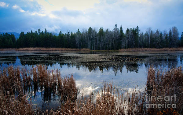 Northeast Washington Art Print featuring the photograph Pond On The Pend Orielle by Idaho Scenic Images Linda Lantzy