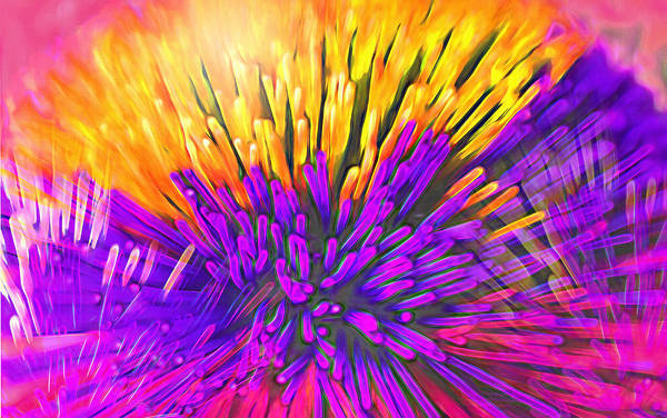 Anemone Art Print featuring the photograph Sea Anemone Abstract - Kooosh Ball by Steve Ohlsen