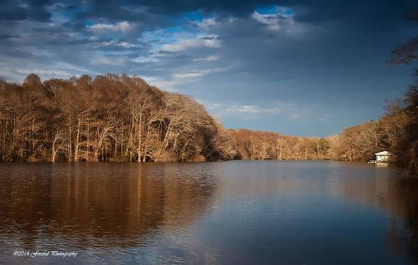 Tree Art Print featuring the photograph Apalachicola River by Debra Forand