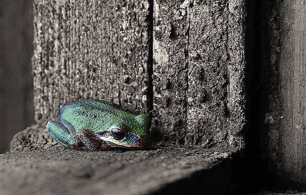Frog Art Print featuring the photograph Blending In by Angie Vogel