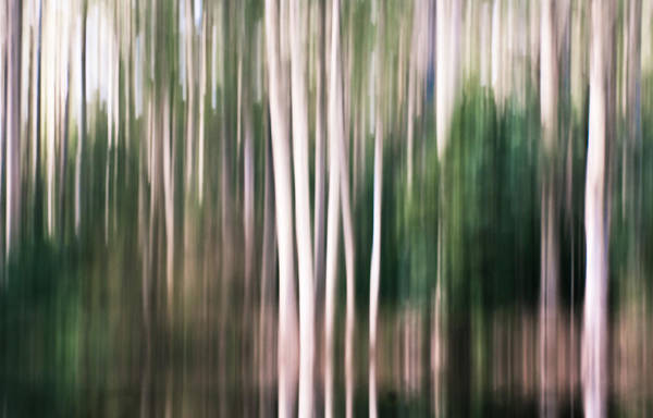 Tree Art Print featuring the photograph Forest Abstract by Caroline Gorka