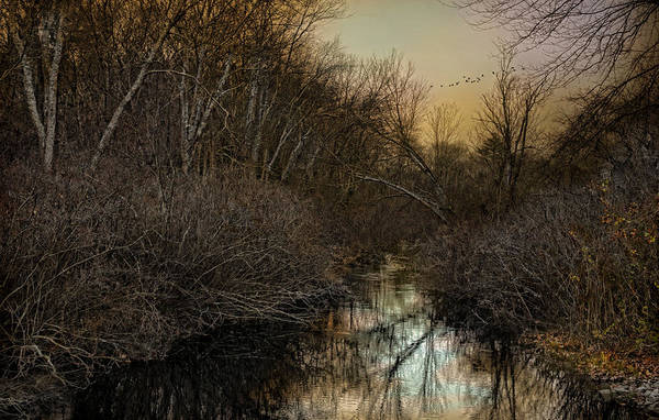 Wetland Art Print featuring the photograph Forlorn by Robin-Lee Vieira