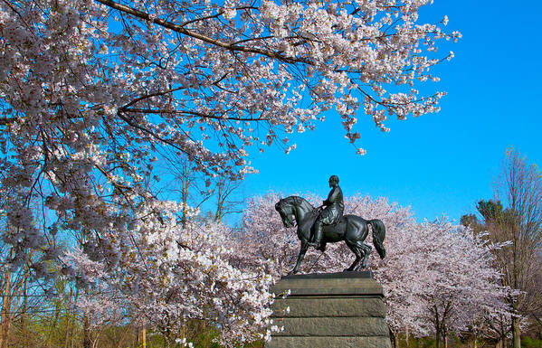 Cherry Blossoms Please Touch Museum Philadelphia Statue General Horse Art Print featuring the photograph General In The Cherry Blossoms by Alice Gipson