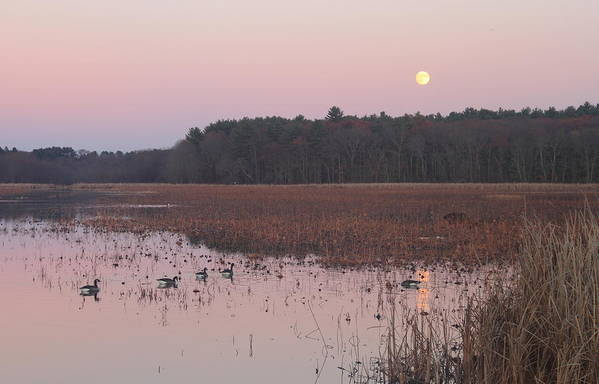 Moon Art Print featuring the photograph Moonrise Over Waterfowl Pond by John Burk