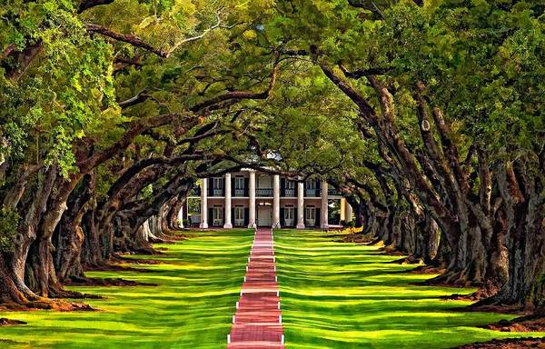 Oak Alley Plantation Art Print featuring the photograph Oak Alley by Steve Harrington