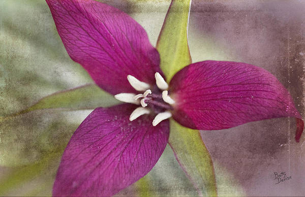 Flower Art Print featuring the photograph Red Trillium by Betty Denise