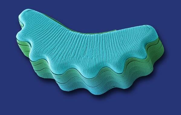 Alga Art Print featuring the photograph Diatom, Sem by Steve Gschmeissner