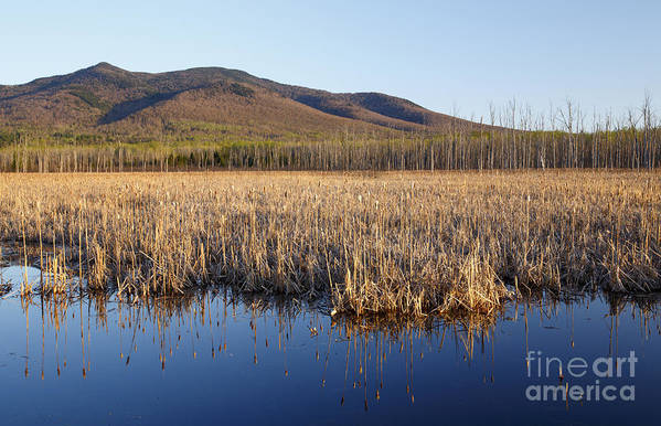 Cohos Regional Trail Art Print featuring the photograph Pondicherry Wildlife Refuge - Jefferson New Hampshire by Erin Paul Donovan