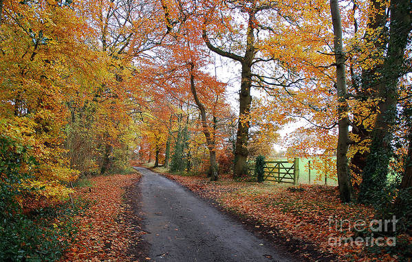 Arley Estate Art Print featuring the photograph Autumn Leaves by Harold Nuttall