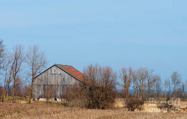 Barn Art Print featuring the photograph Chequerboard Barn by Gary Chapple